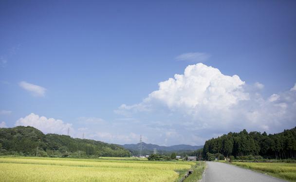 FOREST of WISDOM 叡智の杜を守り、育てる世界に誇る叡智が集う杜を創造する「叡智の杜プロジェクト」