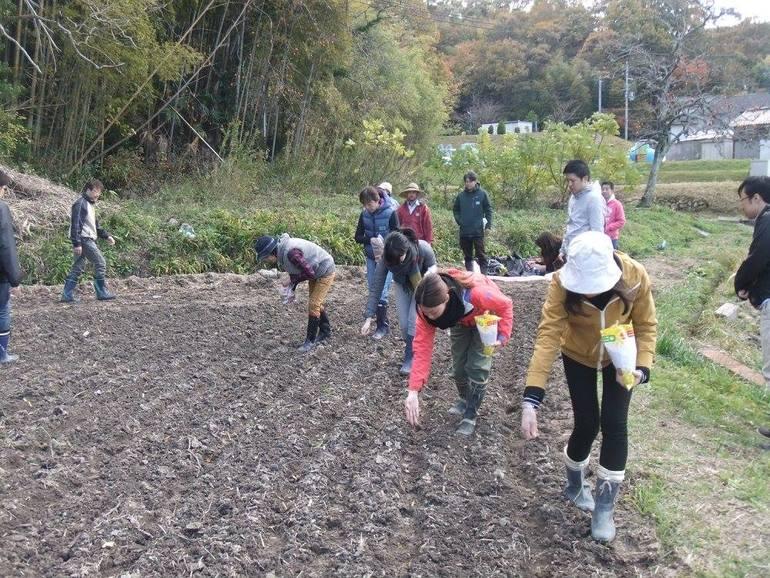 メンバーの一人の休耕田を耕し直し、麦の種を植えたのが2017年の11月のこと。