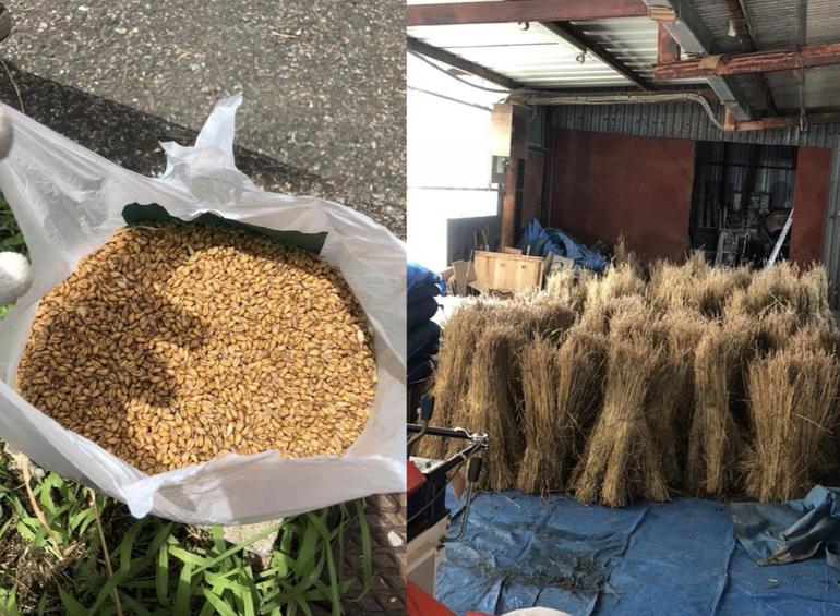 収穫後に分けられた小麦と茅。これを使ってパンを作り、屋根を修復します。