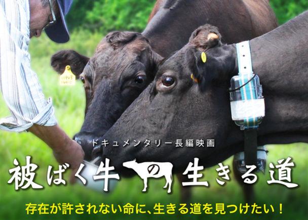 放射能汚染で被曝した牛。ドキュメンタリー映画「被ばく牛の生きる道」の制作をご支援ください。