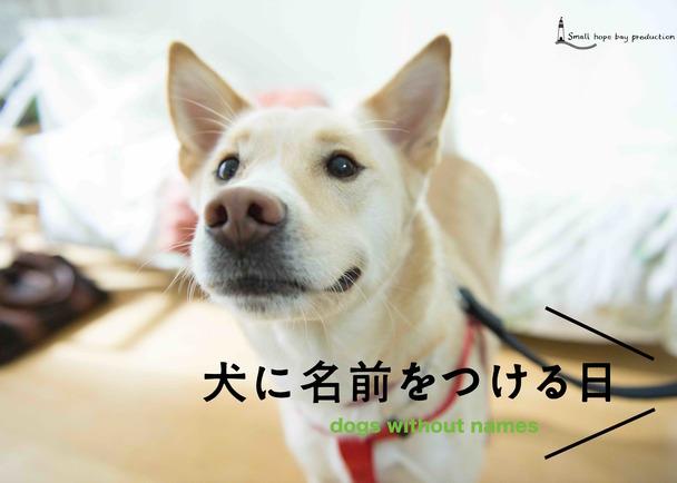 映画「犬に名前をつける日」のロンドン上映をきっかけに、日本とイギリスの犬猫保護をつなげる。