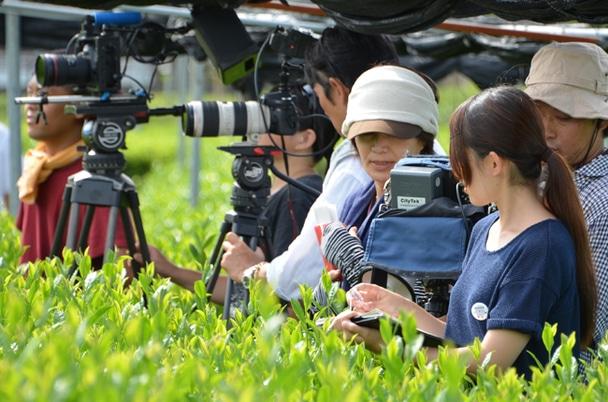 抹茶畑での撮影風景
