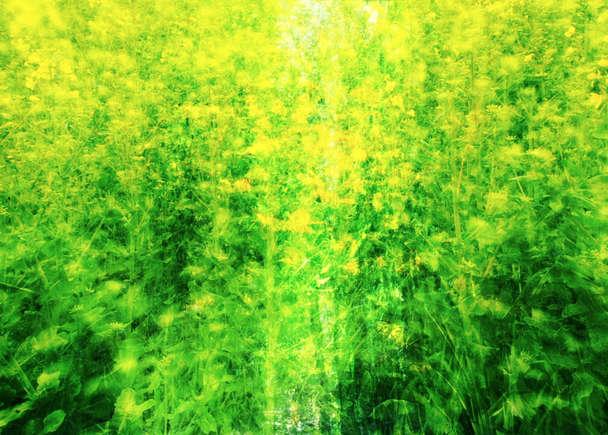 sonorium 共催シリーズ2017『映像と音楽』公演 「音楽の展覧会: 森をめぐって」