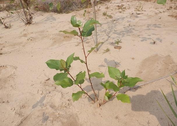 砂漠化防止へのFirstStep企画!東京砂漠実験プロジェクト