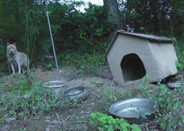 福島警戒区域の現実を後世に伝える!ドキュメンタリー映画『飯舘村の動物たち』(仮)製作プロジェクト